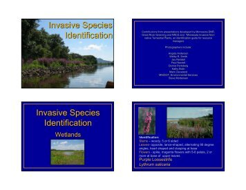 Identification of wetland and woodland species