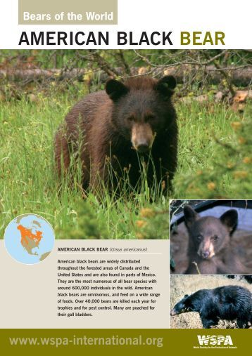 WSPA Bear Pack bear sheets 11-04-06 - World Society for the ...