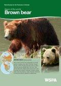 American Black bear - WSPA - Page 5