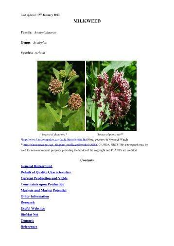 MILKWEED - Ienica.net