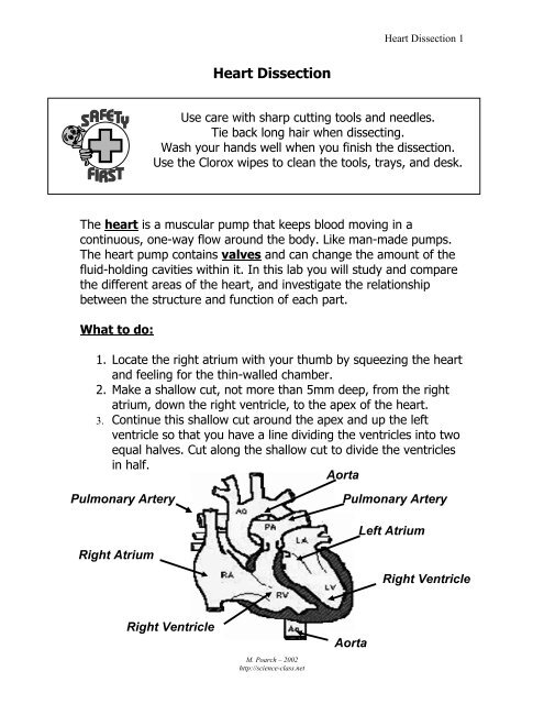 Heart Dissection pdf - Science Class