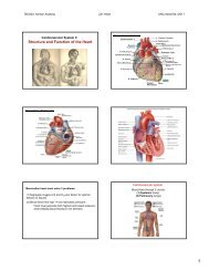 Structure and Function of the Heart - UNCA - UNC Asheville