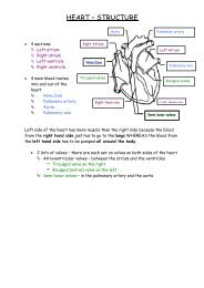 HEART – STRUCTURE - BiologyMad A-Level Biology