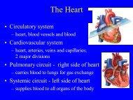 Heart Anatomy Lecture - ECC-BOOK - Extracorporeal Circulation ...