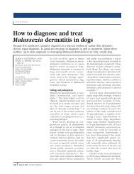 How To Diagnose And Treat Malassezia Dermatitis In - Rottweiler ...