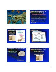 The Classification of Living Things The Classification of Living Things