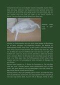 Katzengeburt - Oriental Cats - Seite 2