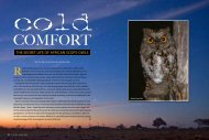 ThE SECrET lifE Of AfriCAn SCOpS-OWlS