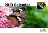 MBNZT Calendar 2013 low - Monarch Butterfly NZ Trust