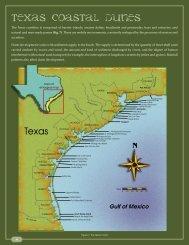 Texas Coastal Dunes - Texas Coastal Erosion Data Network