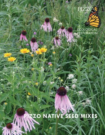PIZZO NATIVE SEED MIXES - Pizzo & Associates, Ltd.