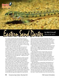 Eastern Sand Darter by Rob Criswell - Pennsylvania Fish and Boat ...