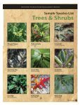 trees & shrubs - Southwest Florida Water Management District - Page 3