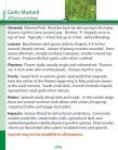 Garlic Mustard - Page 2