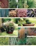 Ornamental Grass Program - Page 3