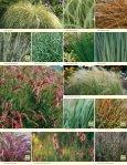 Ornamental Grass Program - Page 5