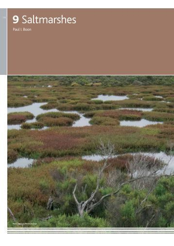 9 Saltmarshes - Melbourne Water