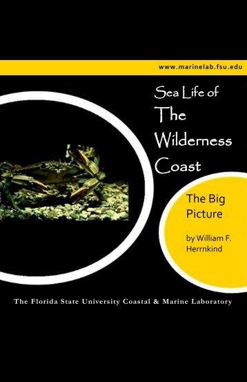 Here - Marine Laboratory - Florida State University