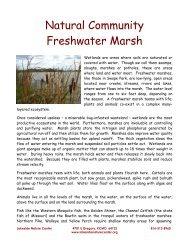 Natural Community Freshwater Marsh - Lakeside Nature Center