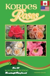 Your supplier of Kordes roses - Southampton Rose Society