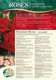Dawsons Roses - The Garden Gurus