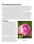 Volume 6 in PDF Format - Paul Zimmerman Roses - Page 2