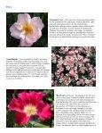 Volume 6 in PDF Format - Paul Zimmerman Roses - Page 4