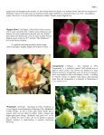 Volume 6 in PDF Format - Paul Zimmerman Roses - Page 5