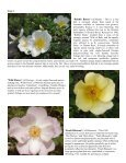 Volume 6 in PDF Format - Paul Zimmerman Roses - Page 6