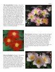 Volume 6 in PDF Format - Paul Zimmerman Roses - Page 7