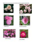 March 2012 Newsletter - Paul Zimmerman Roses - Page 7