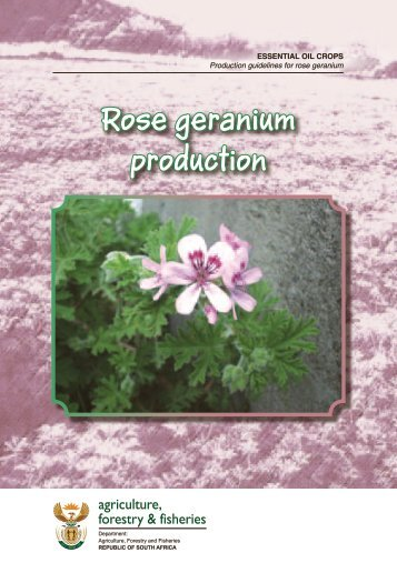 Rose geranium production - Department of Agriculture, Forestry and ...