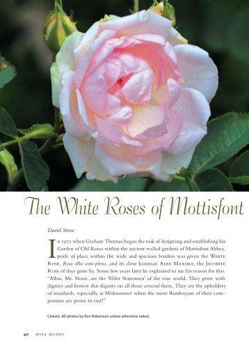 The White Roses of Mottisfont - Heritage Rose Foundation