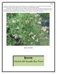 Volume 3 in PDF Format - Paul Zimmerman Roses - Page 3
