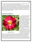 Volume 3 in PDF Format - Paul Zimmerman Roses - Page 5