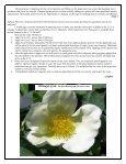 Volume 3 in PDF Format - Paul Zimmerman Roses - Page 7
