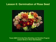 Germination of Rose Seed - Aggie Horticulture - Texas A&M University