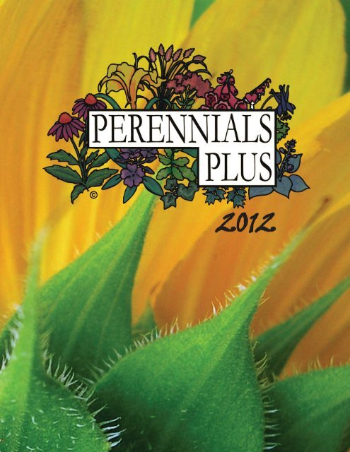 SPECIAL****10 OXALIS BULBS $8.50,,,PINK FLOWERING,,,,LOW MAINTENACE,