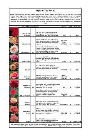 Hybrid Tea Roses - Gethsemane Garden Center