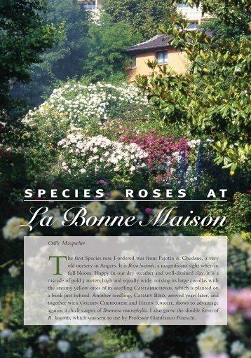 Species Roses at La Bonne Maison - Heritage Rose Foundation