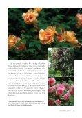 Species Roses at La Bonne Maison - Heritage Rose Foundation - Page 2