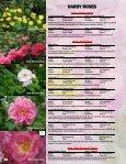 HARDY ROSES - Jeffries Nurseries Ltd. - Page 3