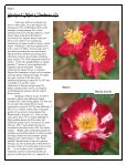 Volume 4 in PDF Format - Paul Zimmerman Roses - Page 2