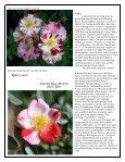 Volume 4 in PDF Format - Paul Zimmerman Roses - Page 3