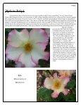 Volume 4 in PDF Format - Paul Zimmerman Roses - Page 5