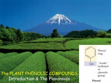 The plant phenolic compounds