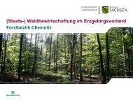 (Staats-) Waldbewirtschaftung im Erzgebirgsvorland