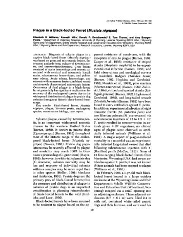 Plague in a Black-footed Ferret (Mustela nigripes) - Journal of ...