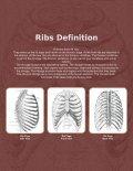 BROKEN RIBS.ai - Vertebrae Fracture - Page 2