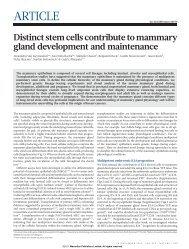Distinct stem cells contribute to mammary gland development and ...
